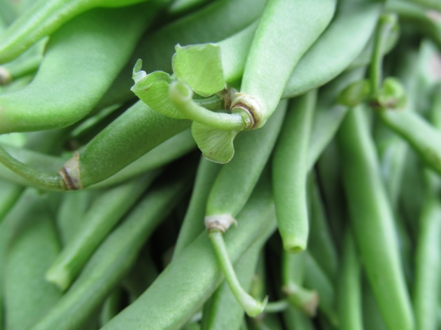 I don't know about you but, out here in the hills, pole beans are very much looked forward to at Summer's apex.